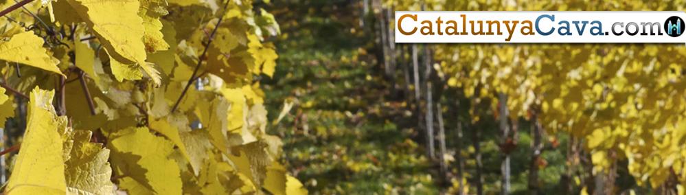 h-Cava-&-Wine-of-Catalunya-3b